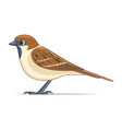 sparrow bird on a white background vector image vector image