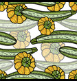 zucchini and pattypan squash seamless pattern vector image