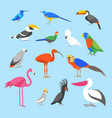 cartoon color exotic bird icon set vector image vector image