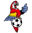 Red macaw bird stand over the soccer ball vector image