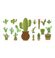 cactus set icon design template isolated vector image vector image
