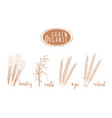 organic grain sketch hand drawing vector image vector image