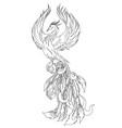 phoenix fire bird outline vector image vector image