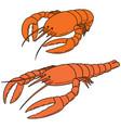 set of lobster vector image