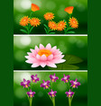 background design with different types of flowers vector image
