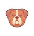 bulldog logotype vector image