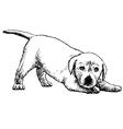 Labrador Retriever puppy 03 1 vector image vector image