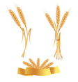 set of gold ears vector image vector image