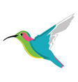 Small exotic hummingbird vector image vector image