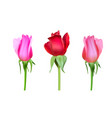 realistic roses bud with stem and leaves closeup vector image vector image