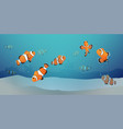 herd of clown fish under the sea vector image vector image