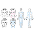facial and body massaging lines for man and woman vector image