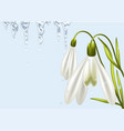 background with snowdrop vector image vector image