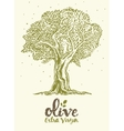 Drawn olive tree label oil vector image vector image