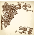 grapes branch vector image vector image