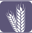wheat spike eps10 agriculture icon vector image