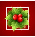Christmas holly with berries vector image