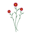 Red Daisy Blossoms on A White Background vector image vector image