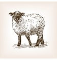 Sheep hand drawn sketch vector image vector image