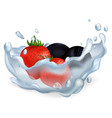 strawberries and blueberries in water vector image vector image