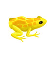 yellow spotted frog reptile animal vector image