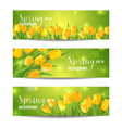 Spring Flower Banner Set - with Colorful Tulips vector image