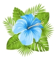 Beautiful Blue Hibiscus Flowers Blossom and vector image
