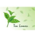 fresh green tea leaves realistic 3d tea leaves vector image