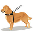 guide dog retriever vector image