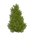 Christmas tree on white background Realistic vector image vector image