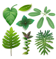 different shape of leaves vector image vector image