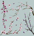 set of sakura japan cherry vector image