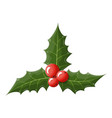 twig holly with leaves and berries on white vector image