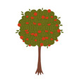 apple tree flat hand drawn vector image