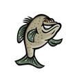 crappie fish standing mascot vector image vector image