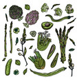 green veggies collection vector image vector image