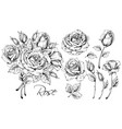 luxurious rose set vector image
