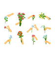 hands pick and hold flowers set gentle springing vector image