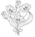 bouquet of hand drawn tulips vector image vector image