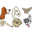 Cartoon dogs heads set vector image