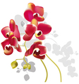orchid flowers vector image vector image
