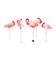 beautiful watercolor flamingos vector image