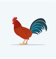 cute rooster domestic bird poultry farming concept vector image