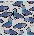 dove pattern pigeon seamless background vector image vector image