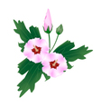 Pink Hibiscus Flower Bud on White Background vector image vector image