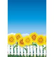 sunflower behind white fence vector image vector image