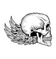 black and white ink sketched human skull vector image vector image