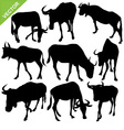 Bull silhouettes vector image vector image