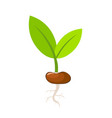 green plant leaves grows from seed spring vector image
