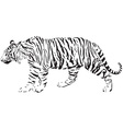 tiger - black and white vector image